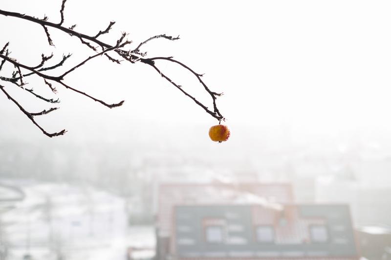 Assen, 2016 | Winter Apple